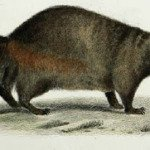 1800s Natural History Survey of New York Online