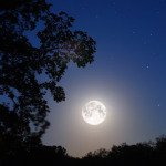 New Paltz: Moonlight Historic Harcourt Preserve Walk