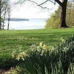 Daffodil High Tea At Wilderstein
