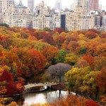 Central Park's Woodlands Stewardship Event Friday